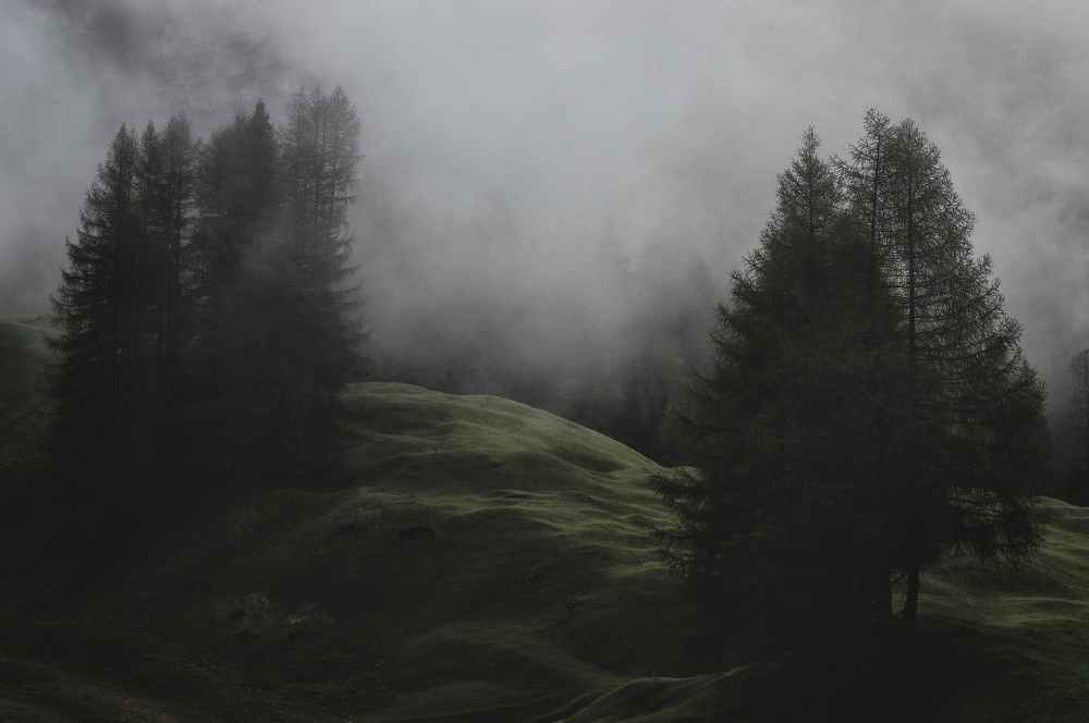 low light photo of mountain with pine trees covered with fogs